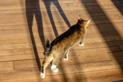 Our autistic cat 8